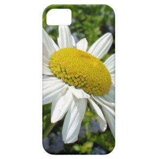 Close Up Common White Daisy With Garden Case For The iPhone 5