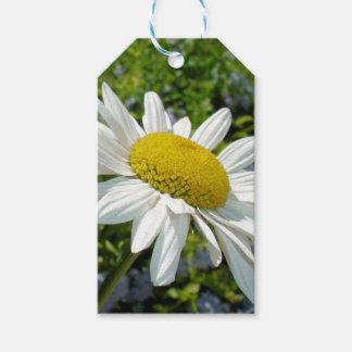 Close Up Common White Daisy With Garden Gift Tags