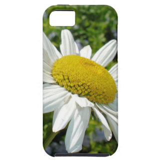 Close Up Common White Daisy With Garden iPhone 5 Case