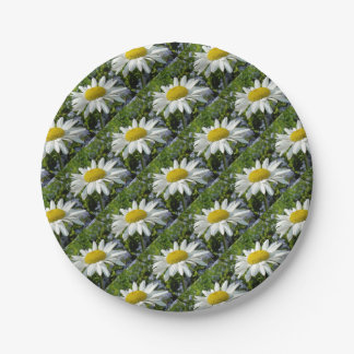 Close Up Common White Daisy With Garden Paper Plate