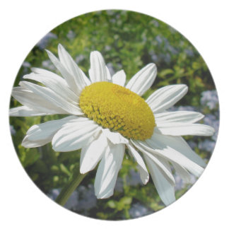 Close Up Common White Daisy With Garden Plate