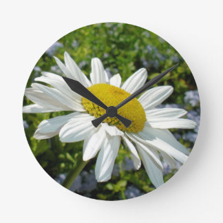Close Up Common White Daisy With Garden Round Clock