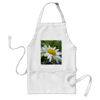 Close Up Common White Daisy With Garden Standard Apron