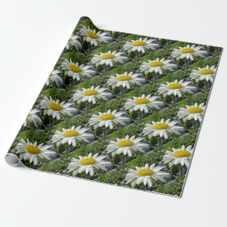 Close Up Common White Daisy With Garden Wrapping Paper