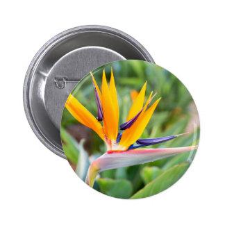 Close up Crane flower or Strelitzia reginaei 2 Inch Round Button
