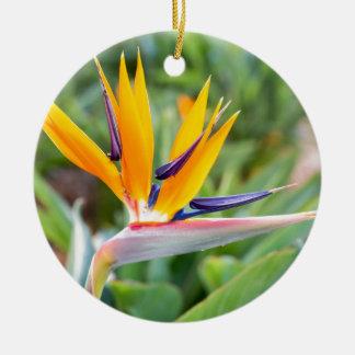 Close up Crane flower or Strelitzia reginaei Ceramic Ornament