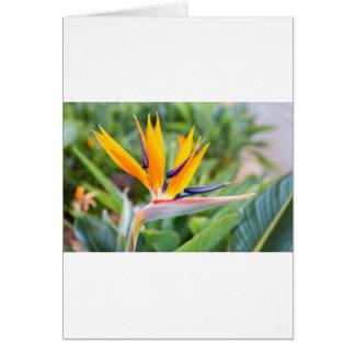 Close up Crane flower or Strelitzia reginaei Greeting Card