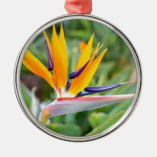 Close up Crane flower or Strelitzia reginaei Metal Ornament