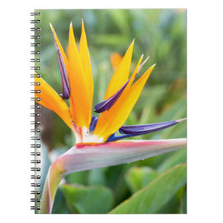Close up Crane flower or Strelitzia reginaei Notebooks