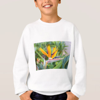 Close up Crane flower or Strelitzia reginaei Sweatshirt