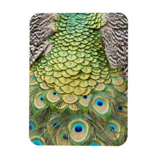 Close up detail of colorful feathers on male rectangular photo magnet