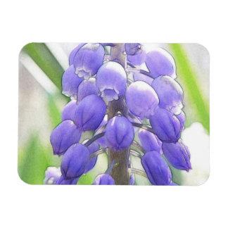 Close Up - Grape Hyacinth Magnet