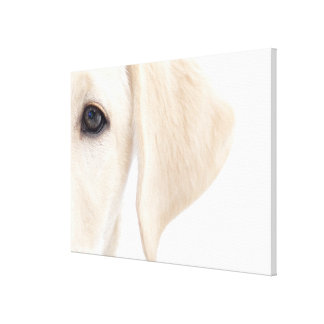 Close-up Half Face of Yellow Labrador Canvas Print