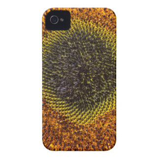 Close up heart of sunflower Case-Mate iPhone 4 cases