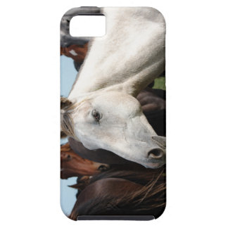 Close-up herd of horses iPhone 5 covers