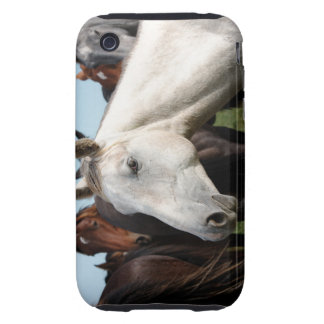 Close-up herd of horses tough iPhone 3 cover