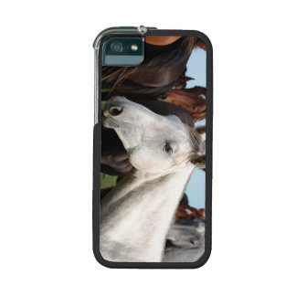 Close-up herd of horses case for iPhone 5/5S