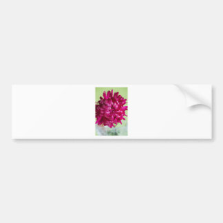 Close-up image of the flower Aster Bumper Sticker