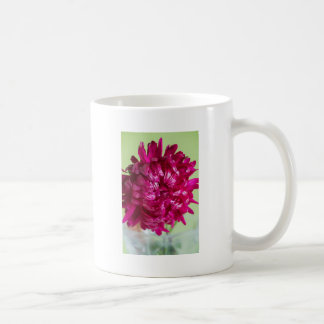 Close-up image of the flower Aster Coffee Mug