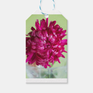 Close-up image of the flower Aster Gift Tags