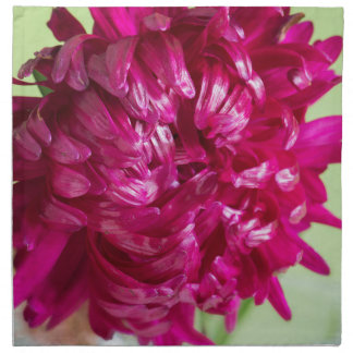 Close-up image of the flower Aster Napkin