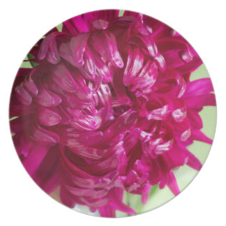 Close-up image of the flower Aster Plate