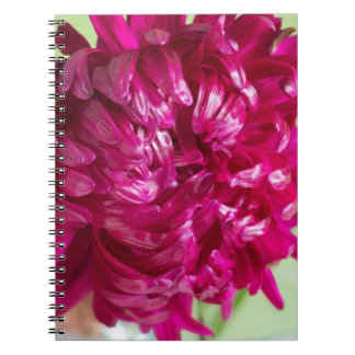 Close-up image of the flower Aster Spiral Notebook