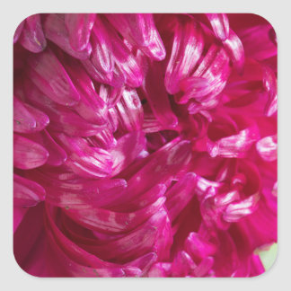 Close-up image of the flower Aster Square Sticker
