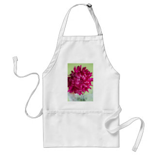 Close-up image of the flower Aster Standard Apron