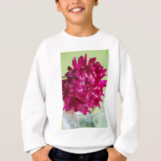 Close-up image of the flower Aster Sweatshirt