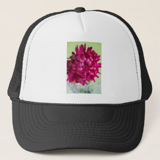 Close-up image of the flower Aster Trucker Hat