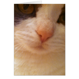 Close Up Kitty with Pink Nose Note Card