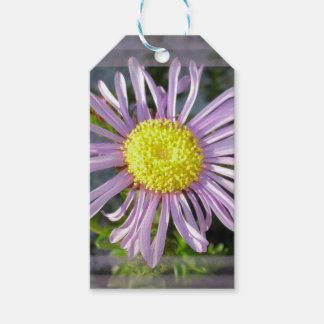 Close Up Lilac Aster With Bright Yellow Centre Gift Tags