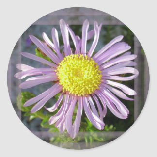Close Up Lilac Aster With Bright Yellow Centre Round Sticker