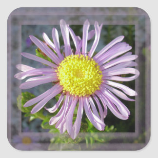 Close Up Lilac Aster With Bright Yellow Centre Square Sticker
