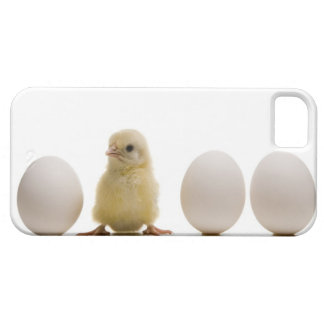 Close-up of a baby chick with three eggs iPhone 5 cases