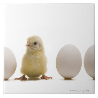 Close-up of a baby chick with three eggs tile
