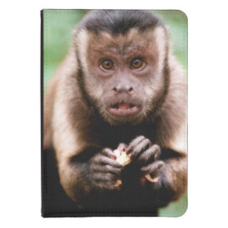Close-up of a black-capped capuchin monkey kindle 4 cover