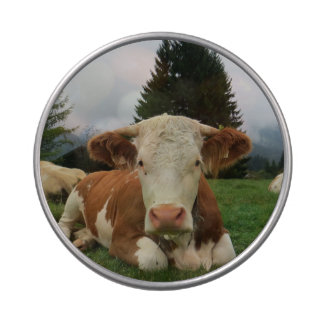 Close up of a brown and white cow laying down