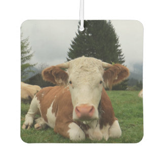 Close up of a brown and white cow laying down car air freshener
