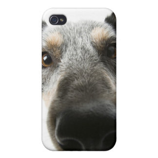 Close-up of a dog's head covers for iPhone 4