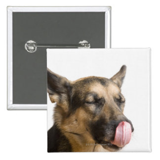 Close-up of a German Shepherd licking its nose 2 Inch Square Button