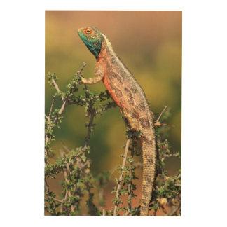 Close-Up Of A Ground Agama (Agama Aculeata) 2 Wood Prints