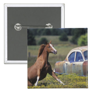 Close-up of a horse running near a car on a 2 inch square button