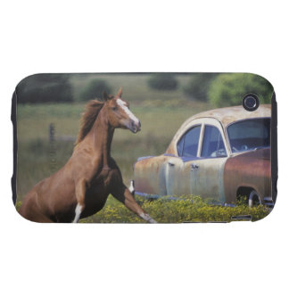 Close-up of a horse running near a car on a iPhone 3 tough cases