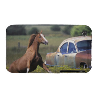 Close-up of a horse running near a car on a iPhone 3 case