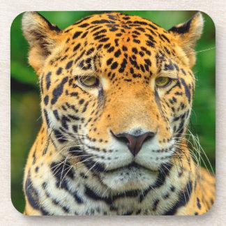 Close-up of a jaguar face, Belize Beverage Coasters