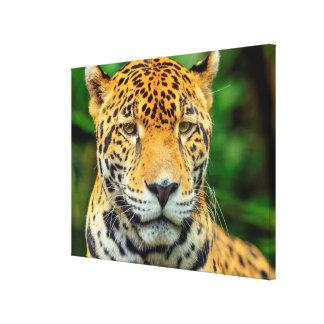 Close-up of a jaguar face, Belize Canvas Print