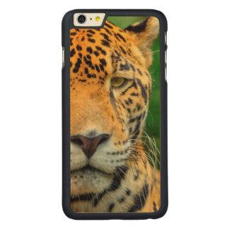 Close-up of a jaguar face, Belize Carved® Maple iPhone 6 Plus Case