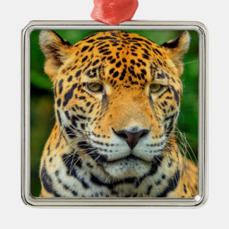 Close-up of a jaguar face, Belize Metal Ornament